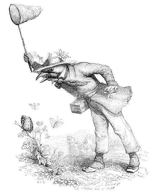 grandville-butterfly-hunt [66524].jpg