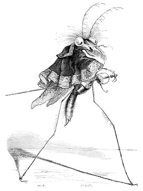 grandville-misocampe [181736].jpg