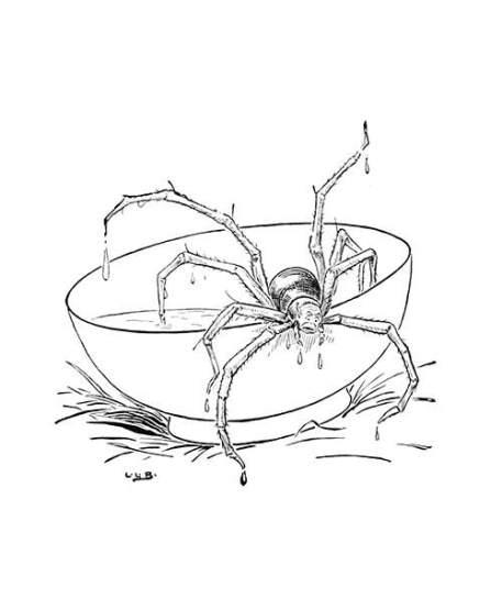 big-spider[636].jpg