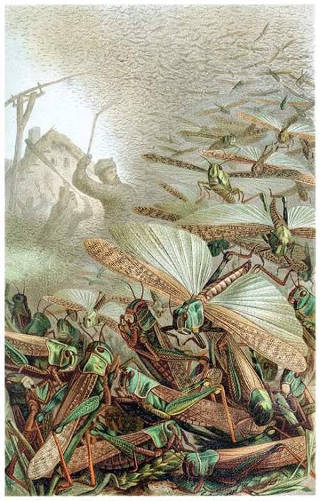 locusts[645].jpg