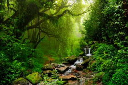 450-60969284-amazon-rainforest[715].jpg
