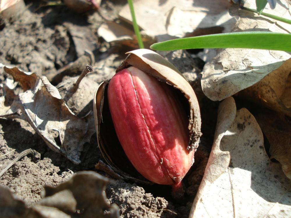 acorn-320534_1920[771].jpg