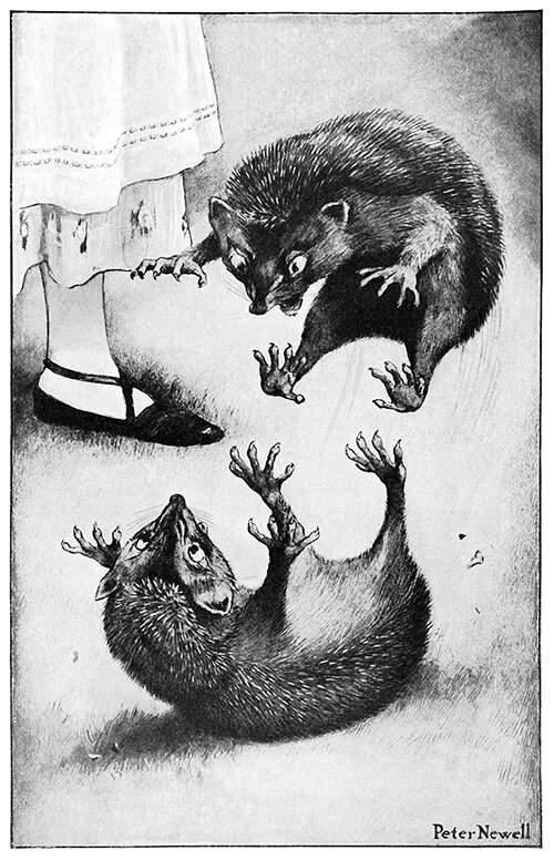hedge-hog-fight[848].jpg
