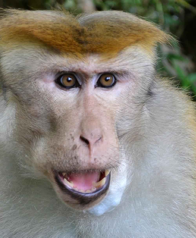 monkey-175682_1280[826].jpg