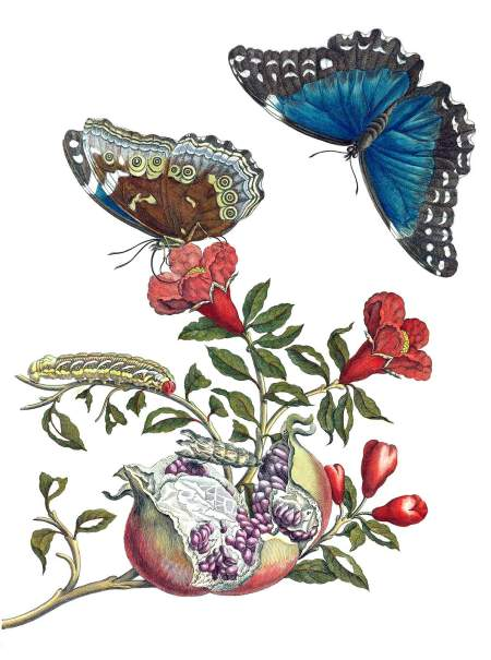 pomegranate-butterfly-1600[851].jpg