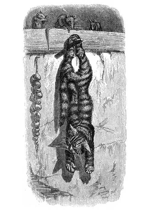 cat-mice[1759].jpg